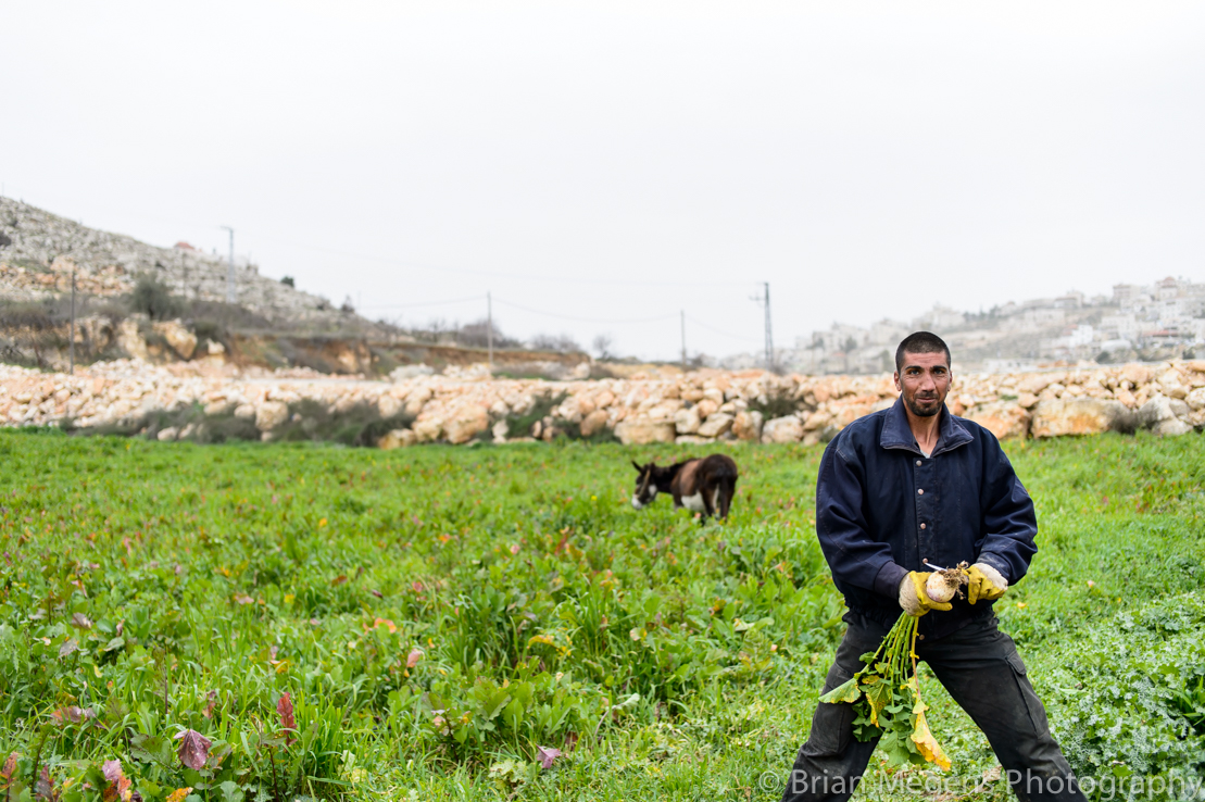 A farmer working on the land, in a village close to Hebron.